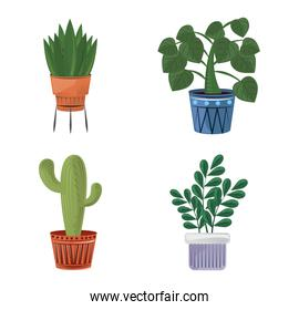 collection of indoor plants in pots, home decor