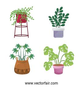 indoor plants in pots, landscaping at home decor