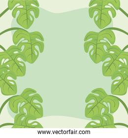 plants leaves monstera decoration green background