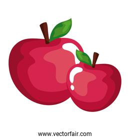 apples fruit vector design