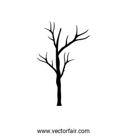 autumn season dry tree with branches silhouette style