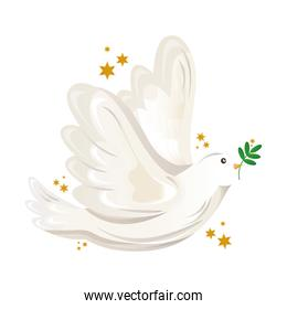 peace dove flying with olive branch