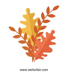 autumn season orange and yellow leafs and branches plant nature