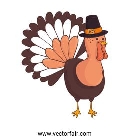 thanksgiving turkey animal with pilgrim hat character