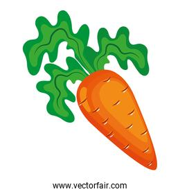 fresh carrot vegetable organic,healthy food