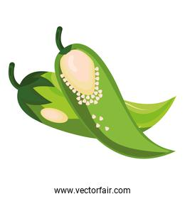 fresh vegetable green chili pepper healthy food icon