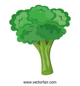 fresh vegetable broccoli healthy food icon