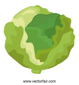 fresh green cabbage vegetable healthy food icon