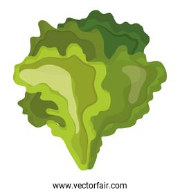 fresh vegetable lettuce healthy food icon