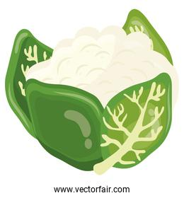 fresh vegetable chinese cabbage healthy food icon