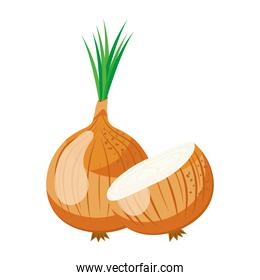 fresh vegetable onion healthy food icon
