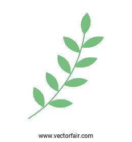 branch with leafs plant icon