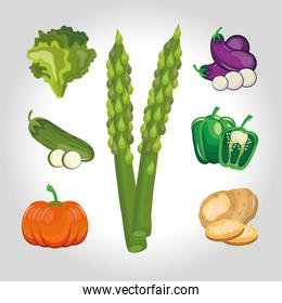 bundle of seven vegetables set icons