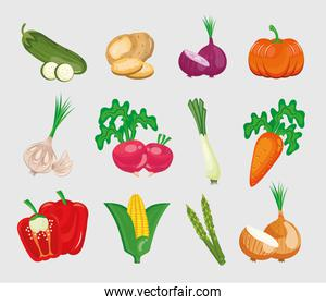 bundle of twelve vegetables set in white background