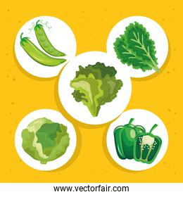 bundle of five vegetables set icons in yellow background