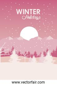 beauty pink winter landscape scene with pines trees and sun