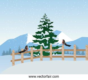 beautiful winter landscape scene with pine tree and robin in fence