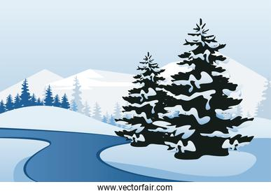 winter landscape scene with pines trees