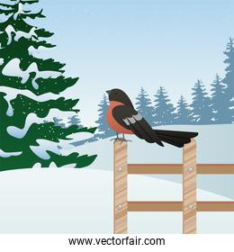 beautiful winter landscape scene with tree and robin in fence