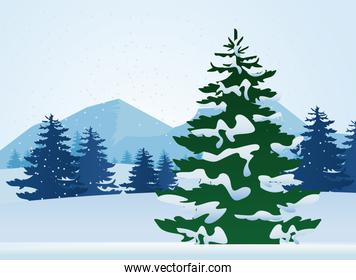 beautiful winter landscape scene with pines trees