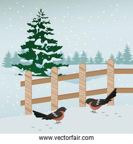 beautiful winter landscape with birds and fence scene