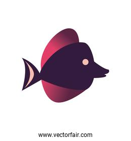 Fish animal purple icon vector design