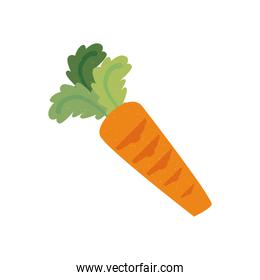 carrot vegetable fresh icon isolated