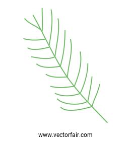 pines leaf icon isolated vector design