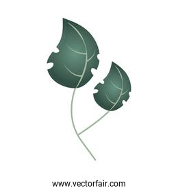 branch with leaf foliage botancial icon isolated