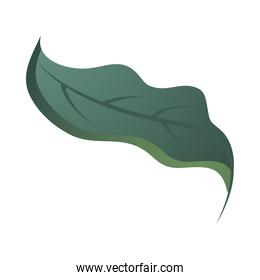 leaf forest foliage nature icon over white background