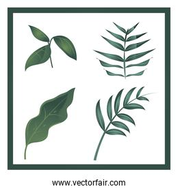 set of different leaves branch foliage nature icons