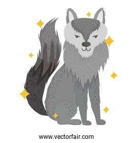 cute wolf animal with stars in cartoon design