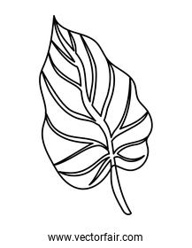 leaf with stem over a white background