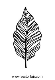 leaf and stem with a white background