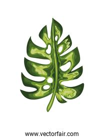leaf of green color with stem in a white background