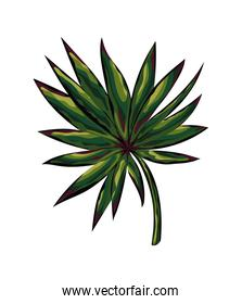 exotic plant with green leaves