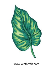 leaf of green color and stem with a white background