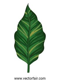 leaf of green color with stem isolated icon