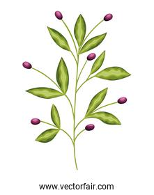 plant with many green leaves and purple flowers