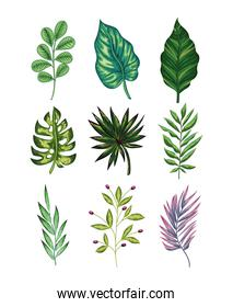 set of green leaves and one purple on white background