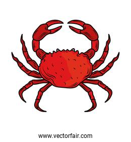 seafood crab menu gourmet fresh icon isolated image