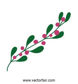 foliage leaves berry floral plant icon isolated design