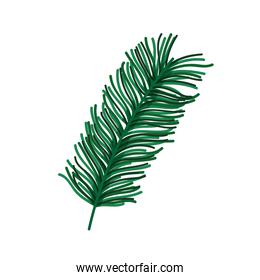 branch pine tree foliage nature icon design