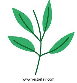 natural branch leaves plant foliage icon design
