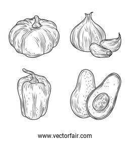 pumpkin avocado pepper and garlic vegetables fresh organic nature, hand drawn style