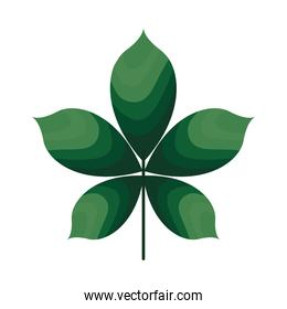 plan with five leaves of green color