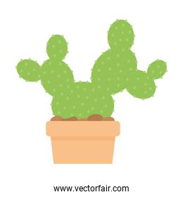 cactus with a green color and on a pot