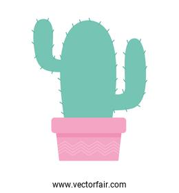 cactus over a pink color pot over a white background