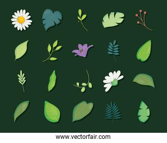leaves and flowers icon set, colorful design