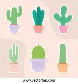set of six cactus icons over a salmon color background
